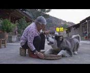 阿盆姐家的大王 Apenjie with Dawang
